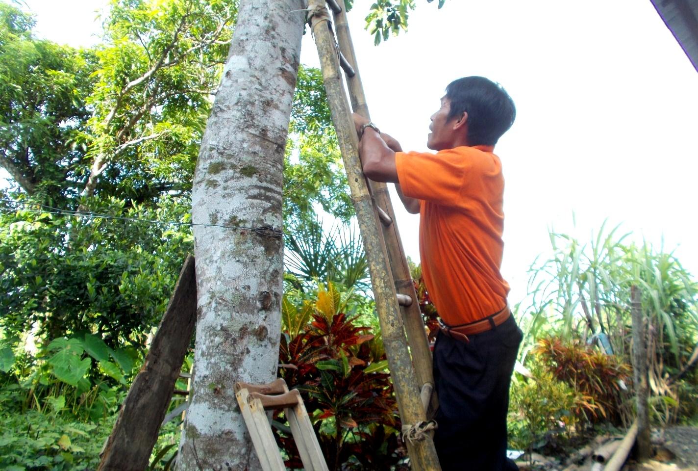 150811-24_Jobert Tayo_Climbing the tree_1